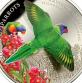 Острова Кука 5 долларов 2015 Многоцветный лорикет
